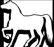 Horseboxes For Sale Midlands UK
